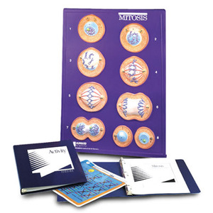 Mitosis Model Activity Set(w40219)