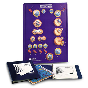 Meiosis Model Activity Set(w40220)